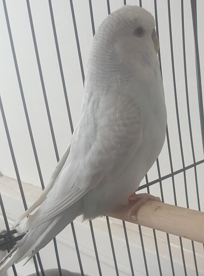 Prendergast Blackeye White